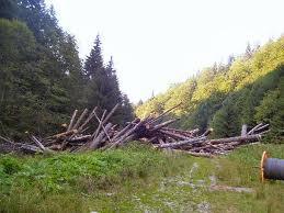 taieri de copaci
