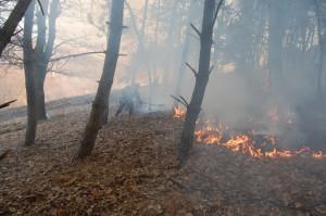 incendiu padure
