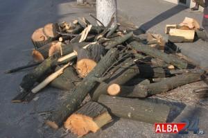lemne pomi copaci taiati
