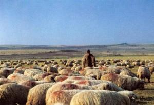 cioban turma oi