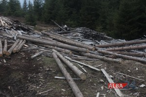 lemne, defrisare