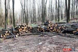 lemne, defrisare, mamut