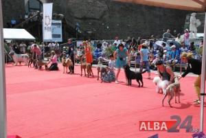 premii 10 categorii expo chino 2015 alba iulia