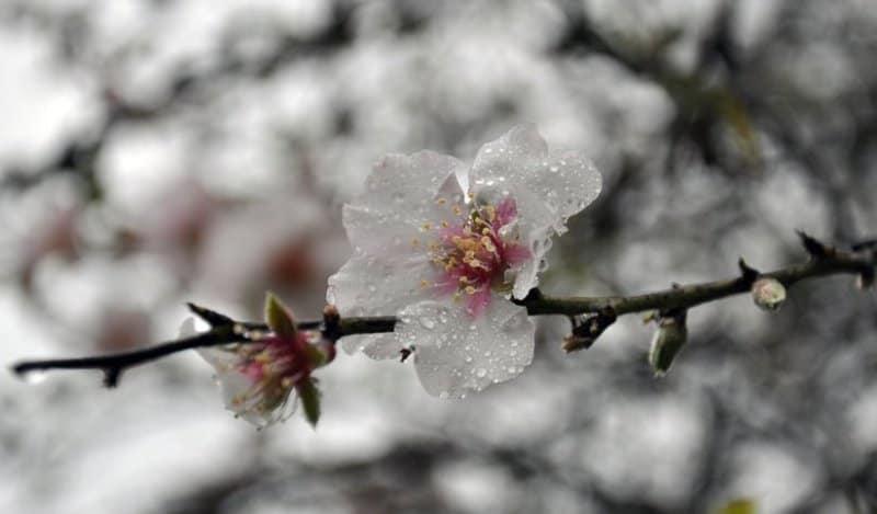 flori ploaie