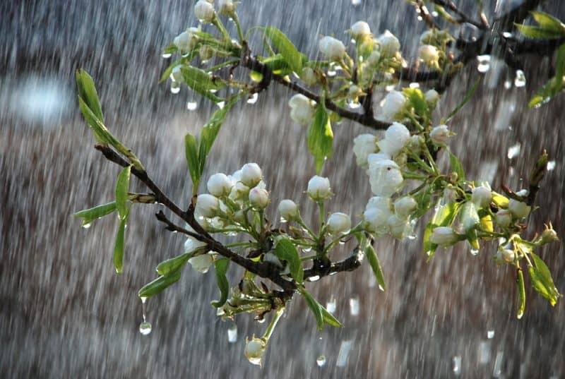 primavara ploi