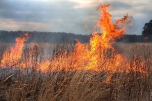 foc incendiu vegetatie uscata teren