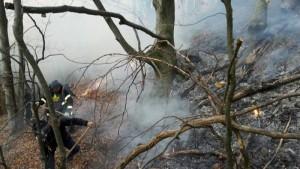 pompieri incendiu padure vegetatie