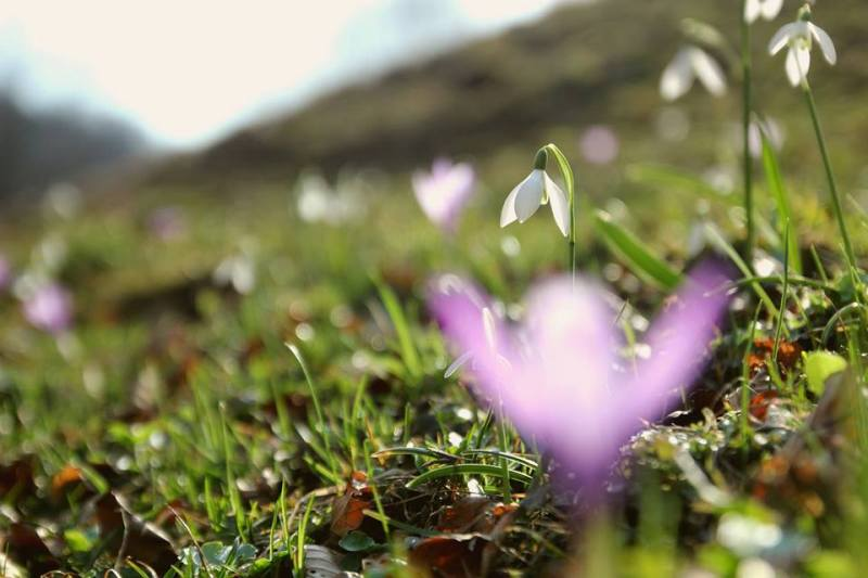 branduse flori primavara