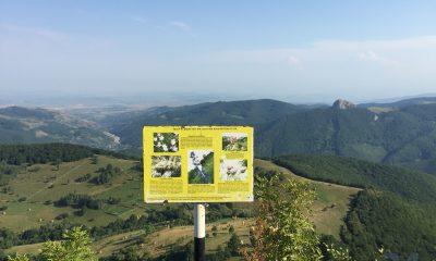 piatra cetii, drumetii, munte, judetul alba, natura
