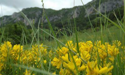 flori de munte