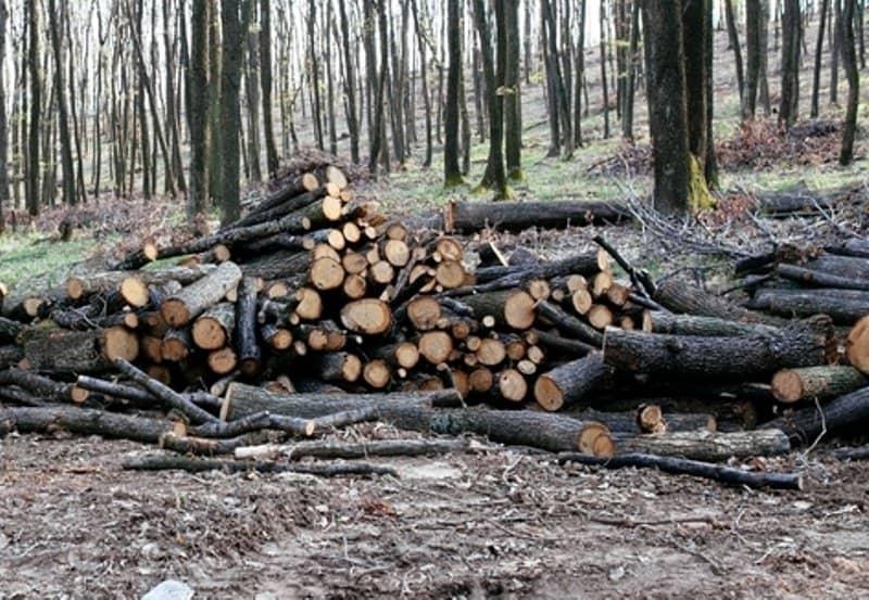 lemn furat