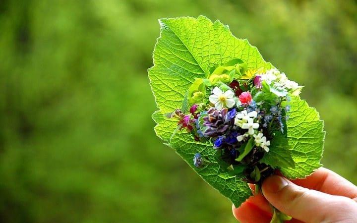 flori meteo primavara