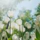 flori soare