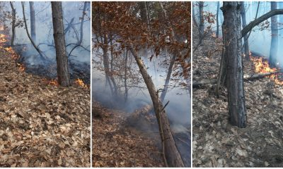incendiu vegetatie litiera padure craiva
