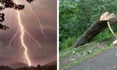 colaj furtuna copaci rupti