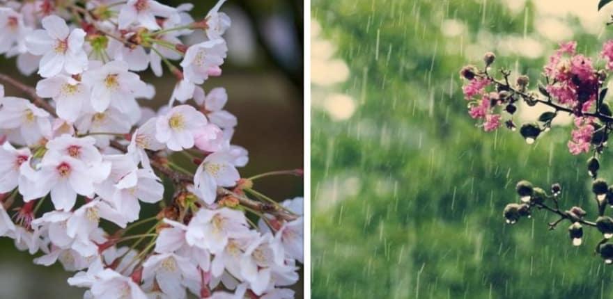meteo flori ploi