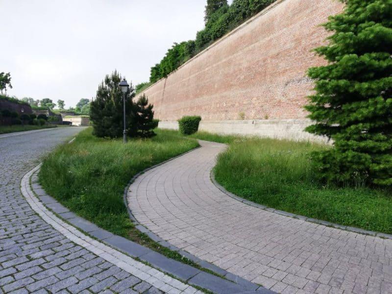 iarba 5