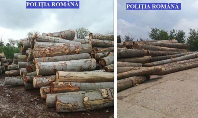 lemn confiscat politia