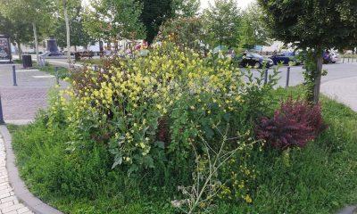 iarba in cetate