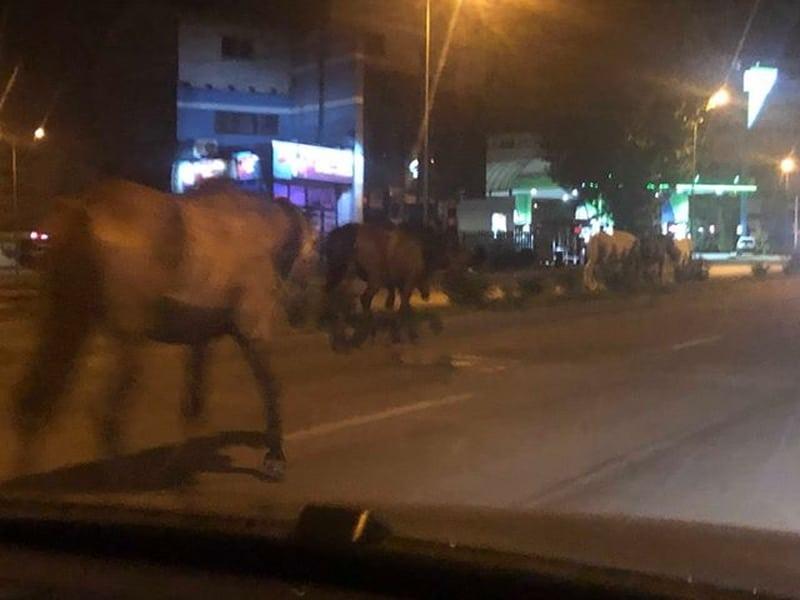 cai noaptea