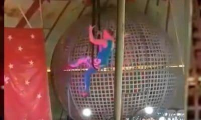 accident circ acrobata