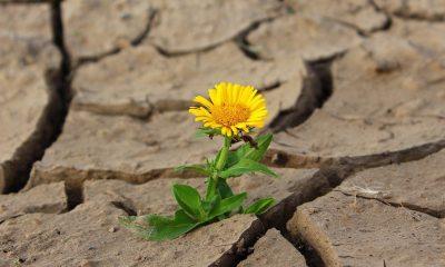 seceta floare pixabay